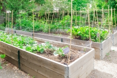 Raised Garden Frames